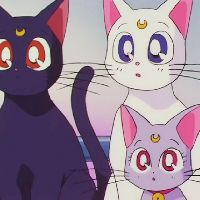 Top 20 Cute Anime Cats